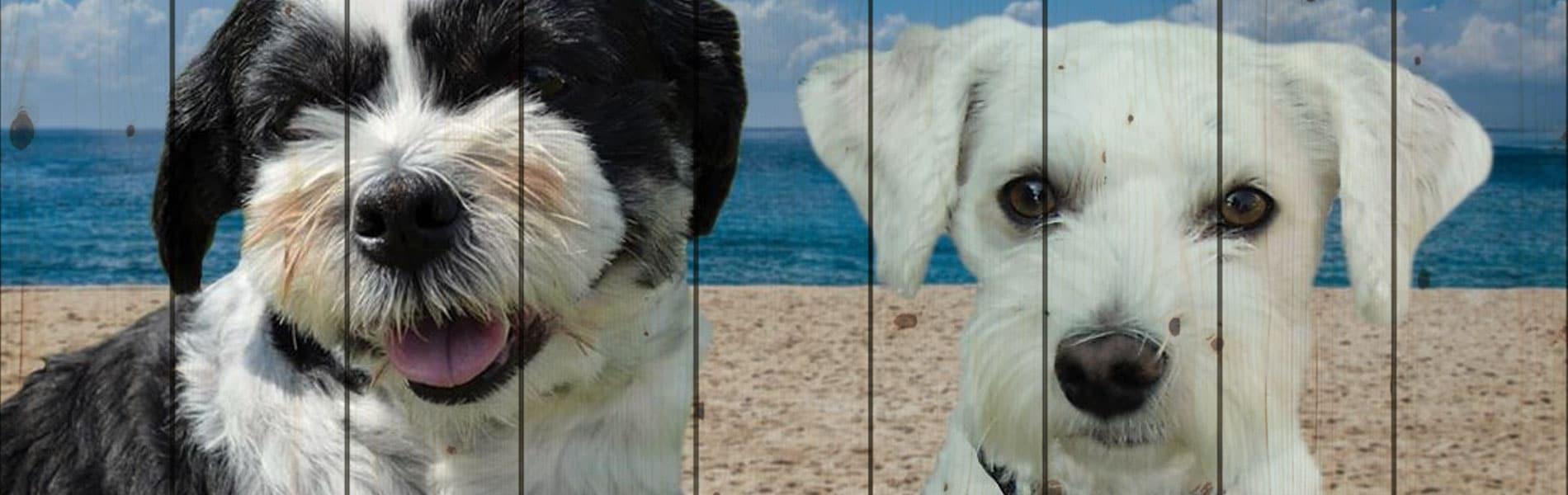 Een mooie dierbare herinnering van 2 lieve hondjes, geprint op hout